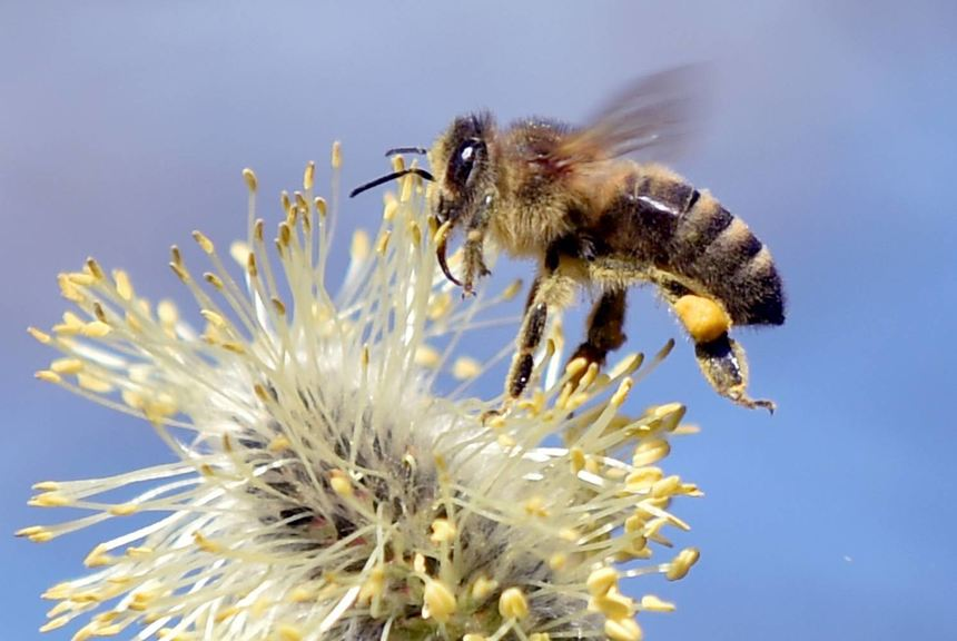 Bienen haben es gerne bunt