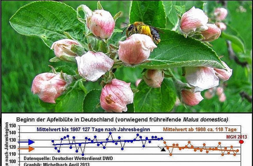 Aufgrund des kühleren Frühjahrs verzögerte sich auch der Beginn der Apfelblüte. In der Phänologie ...